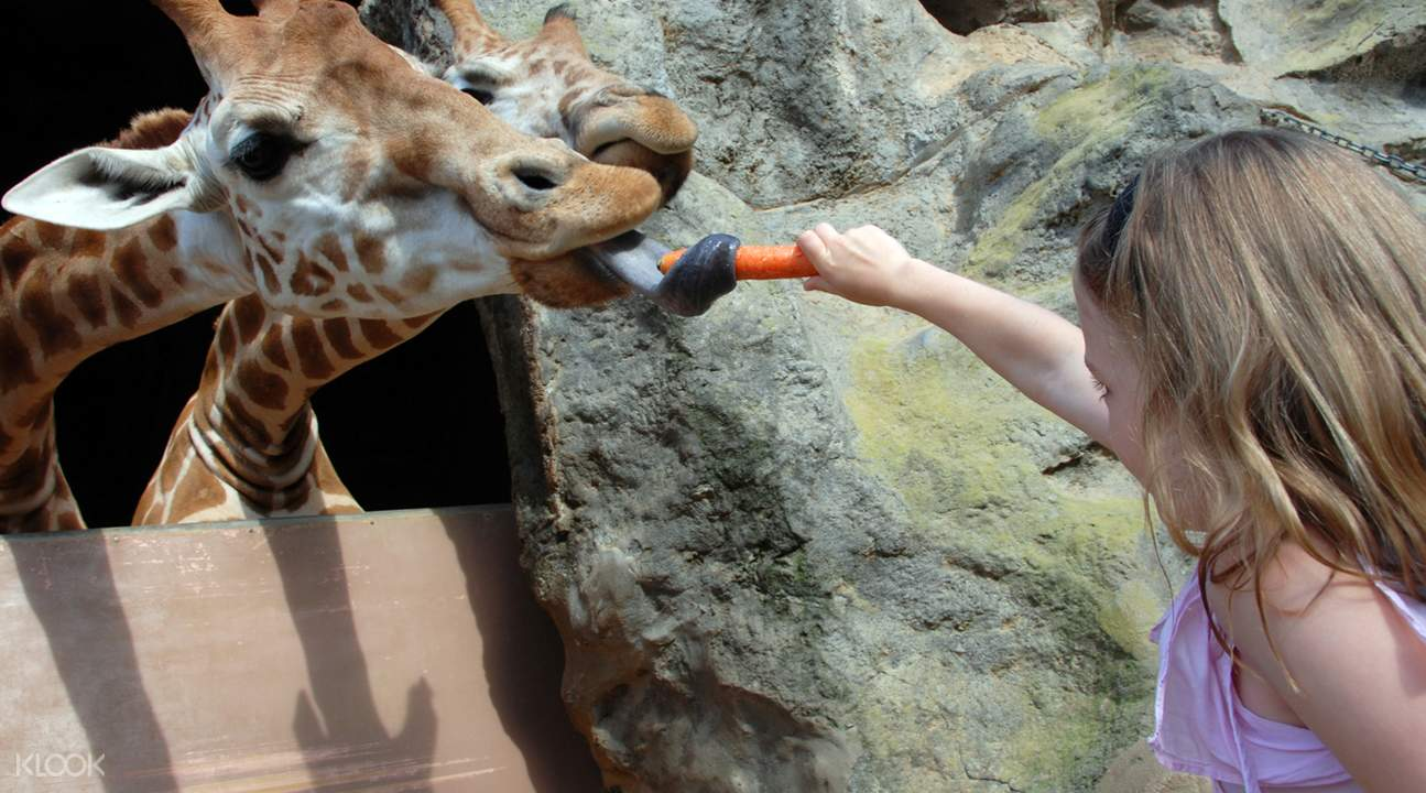 塔隆加野生动物园缆车之旅 & 与树熊合照